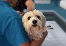 Mascotas y coronavirus: Revisa la información y recomendaciones del Colegio Médico Veterinario
