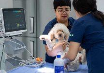 Hospital Clínico Veterinario UNAB Viña del Mar responde dudas sobre el coronavirus y las mascotas