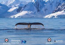 Biología Marina UNAB celebra su XX aniversario con charla de destacado exalumno