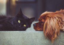 Experta en bienestar animal entrega recomendaciones para las mascotas durante la pandemia