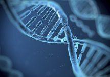 """Investigadora UNAB rescata el rol de los virus en nuestra evolución: """"Todos somos en parte virus"""""""