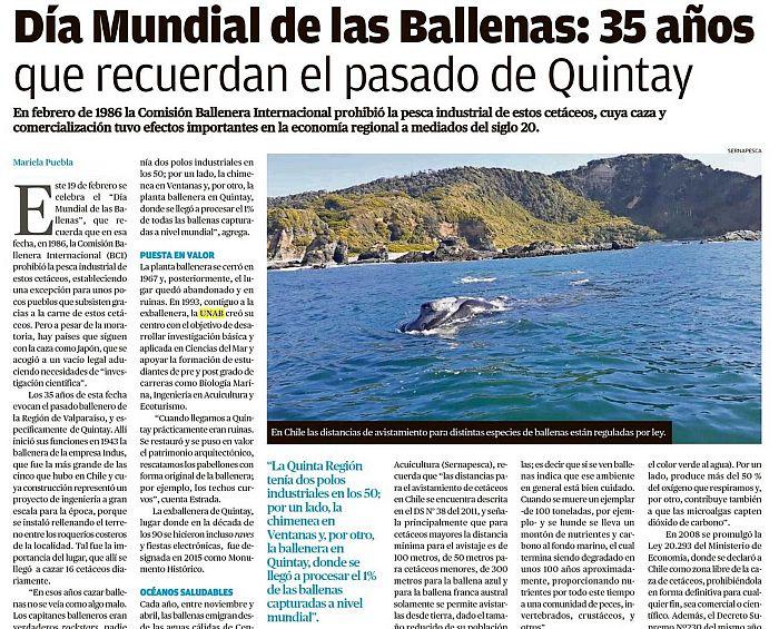 Día Mundial de las Ballenas: 35 años que recuerdan el pasado de Quintay