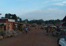 Proyecto coordinado por ecólogo UNAB busca prevenir el ébola en África a través de la música