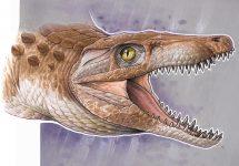 """El """"abuelo"""" de los cocodrilos modernos: Investigador UNAB es parte de importante hallazgo paleontológico"""