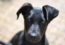 Sello Investigación| Estudio aborda transmisión de bacterias en parásitos de perros callejeros del Gran Concepción