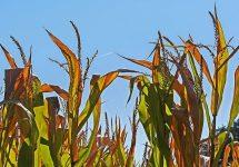 ¿Cuál será el futuro de las plantas ante la crisis climática? Investigadora UNAB explora cómo estas responden a los cambios de su entorno